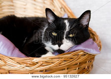 Black Cat Lying In A Basket With Purple Pillow