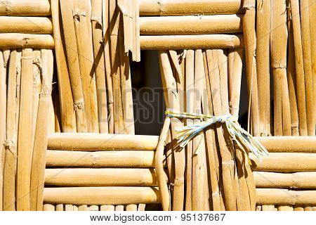 Texture Bamboo In Morocco Africa Brown