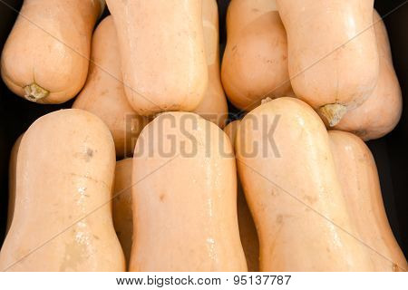 elongated pumpkins