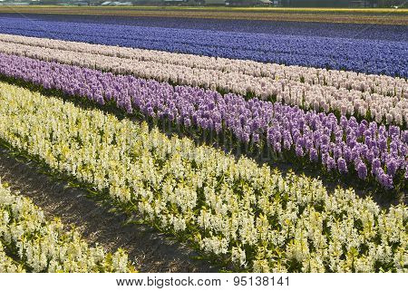 Floral Colorful Fields