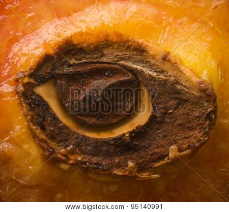 Half Of Peach With Stone In Shape Of An Eye