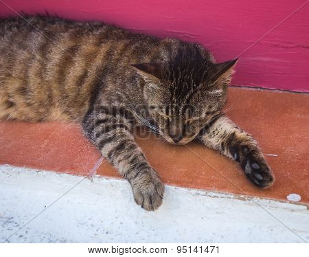 Cat Sleeping On The Step