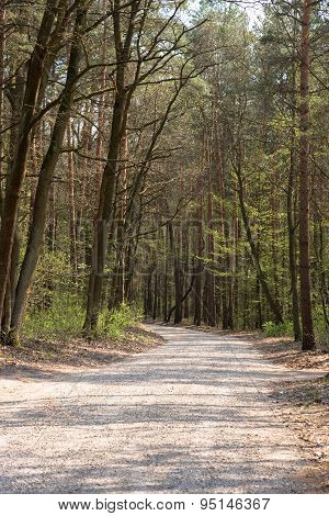 Unmade Turning Road In Forest