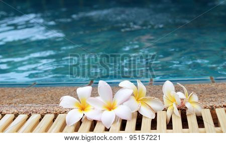 Plumeria Flower And Blue Swimming Pool Rippled Water Detail