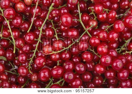 Background Of Redcurrant