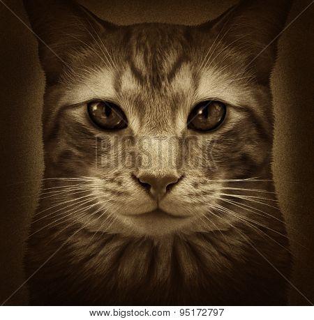 Cat Grunge