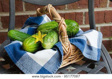 Organic Cucumbers In Basket