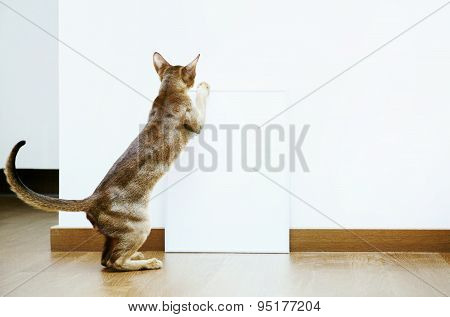 Hipster Scandinavian Design.  Mock Up With Cat And White Frame