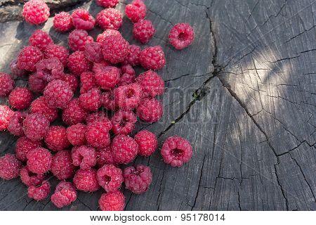 Ripe Raspberries On A Cracked Stump