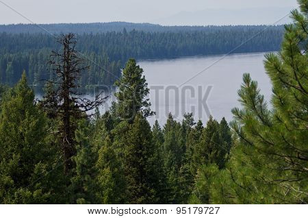 Mountain Lake Hidden Deep In The Pine Forest