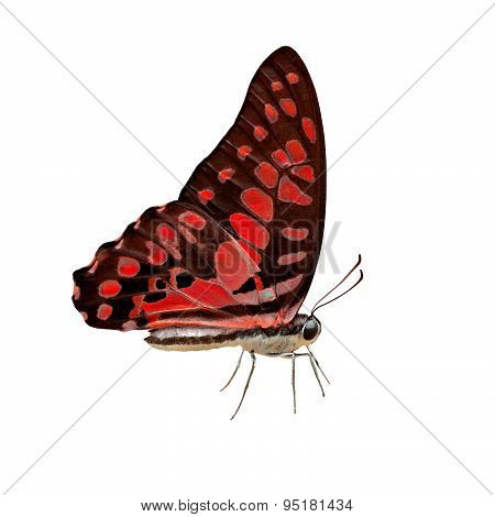 Exotic Color Butterfly On White Background