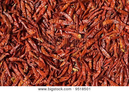 Red Chili Peppers Drying In The Sun