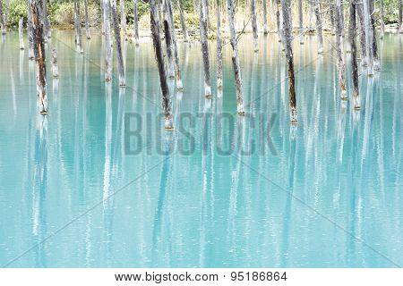Close up blue pond