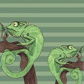 stock photo of chameleon  - Chameleon card vector illustration fun cartoon text - JPG