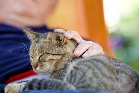 stock photo of cuddle  - Tabby cat enjoying cuddling in old man - JPG