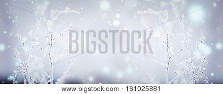 Winter nature background. Winter landscape. Winter scene. Frozen flower. Panoramic Banner
