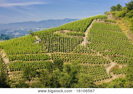grand cru vineyard, Cote Rotie, Rhone-Alpes, France