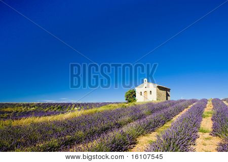 chapel with lavender field, Plateau de Valensole, Provence, France