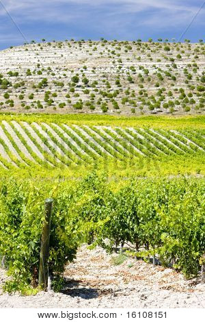 vineyards near Villabanez, Valladolid Province, Castile and Leon, Spain