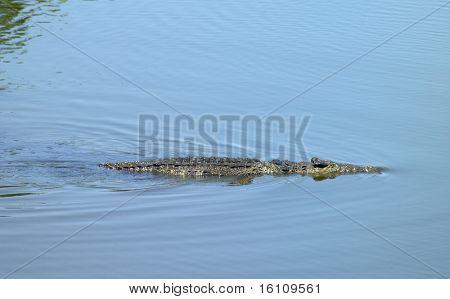 crocodile, Criadero de Cocodrilos (crocodile's farm), Boca de Guama, Matanzas Province, Cuba