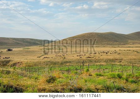 Herd Of Sheep In Steppe