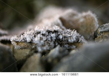 A wilted brown leaf with hoar frost