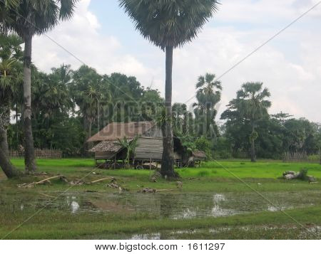 Ricefields With A Farmer House In The Countryside, Phnom Pen, Cambodgia