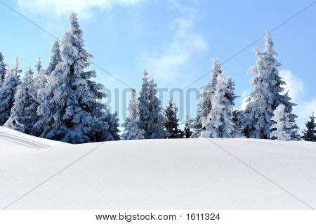 Snow Mountain Trees