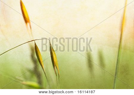Spring Plant Textures