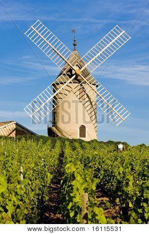 vineyards with windmill near Chenas, Beaujolais, Burgundy, France