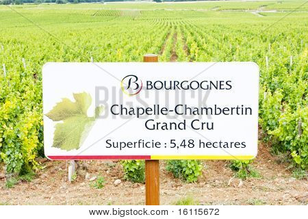 grand cru vineyard of Chapelle-Chambertin, Cote de Nuits, Burgundy, France