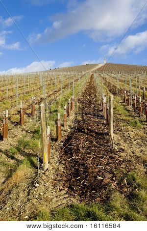 vineyard, Moet et Chandon, Ay, Champagne Region, France