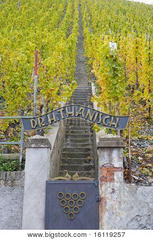 vineyard Doctor, Bernkastel, Rheinland Pfalz, Germany