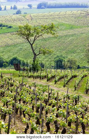vineyards of Cote Chalonnaise region, Burgundy, France
