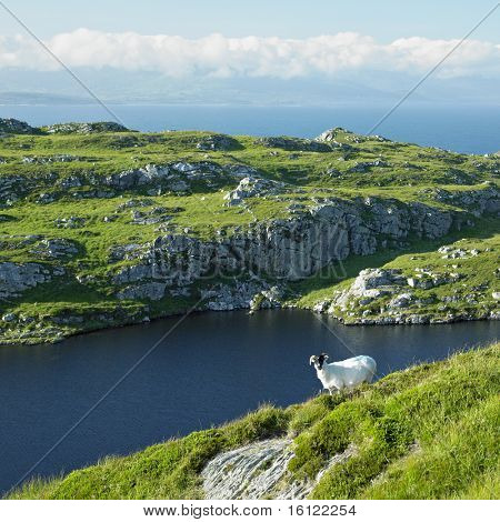 Sheep's Head Peninsula, County Cork, Ireland