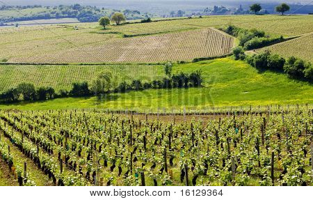 vineyards of Cote Chalonnaise region, Burgundy, France