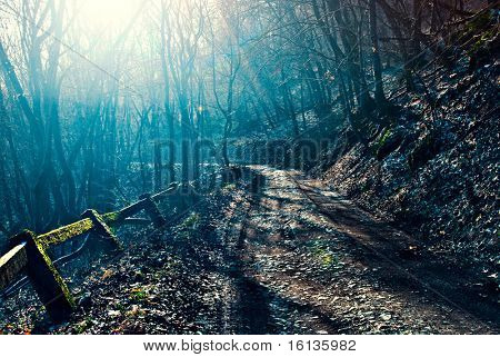 Dark, scary road in the forest