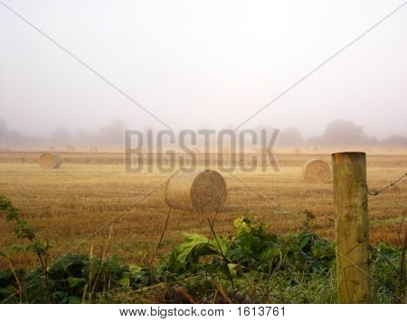 The Hay Field In Early Morning