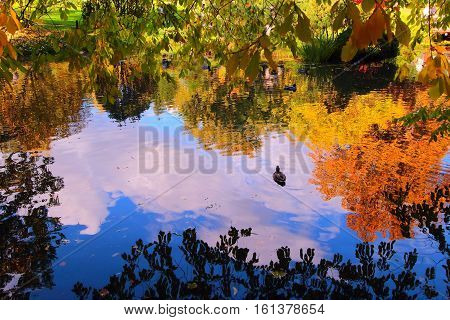 Beautiful autumn pond with ducks and trees reflected in water.