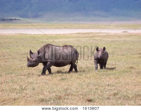 Rhinoceros In The Wild African Savanna, Ngorongoro Park, Tanzania