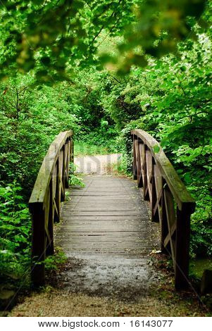 wood bridge in forest