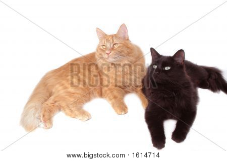 Red Cat And Black Cat Friends