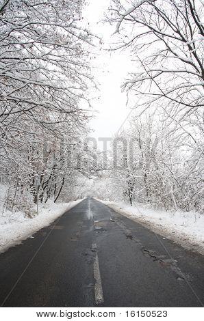 paisagem de Inverno. Estrada de Inverno e árvores cobertas de neve