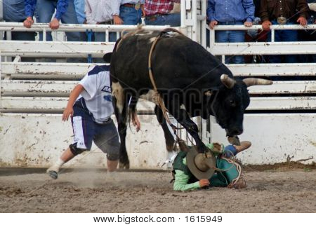 Bull Rider On Ground