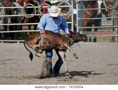 Cowboy With Calf