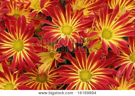 Red and Yellow Flowers