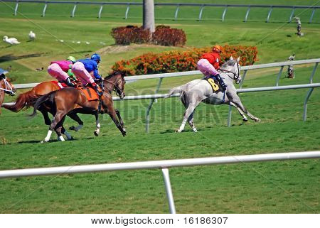 Thoroughbreds Racing on Grass