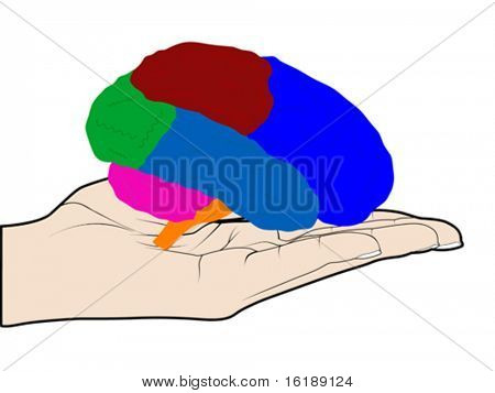 human brain in hand