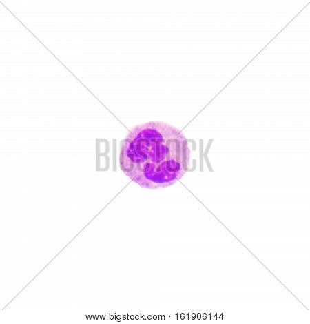 Blood cells on white background.medical science background.