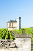 foto of clos  - vineyards of Clos Blanc De Vougeot Castle - JPG